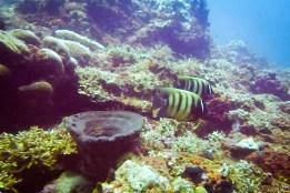 Bali_diving_2016_29