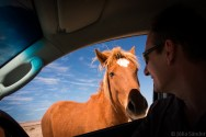 Horse looking into the car