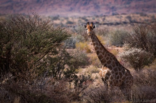 south-africa-augrabies-2016-9