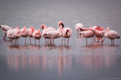 Flamingos resting