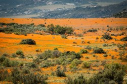 south-africa-western-cape-namaqualand-2016-19