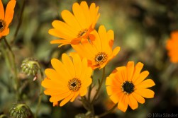 south-africa-western-cape-namaqualand-2016-20