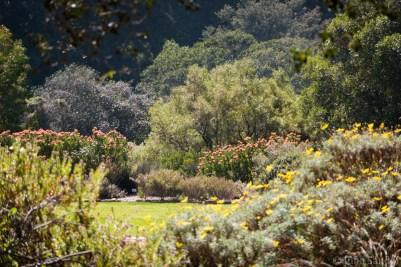 Botanical garden Kirstenbosch