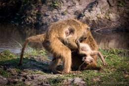 Monkey (mother) love