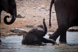 Etosha elephant