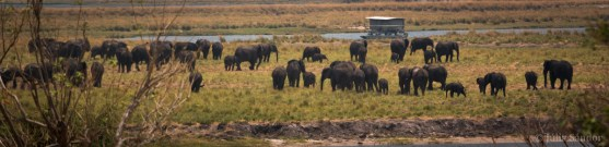 Chobe view in the early afternoon - elephants gathering