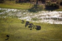 Zebras in the early morning sun