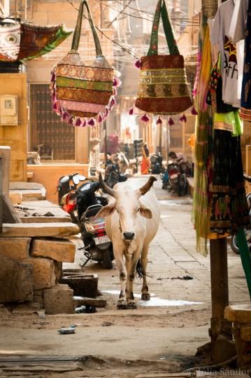 Streetview in Jaisalmer, next to the Patwa Haveli