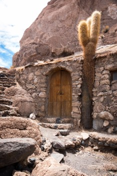 Several thousand years old cactus. Its wood is used, although protected - the door beside it is also from cactus wood.