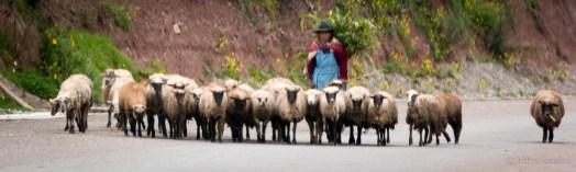 Everyday scene on the highways of Peru