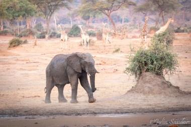 African Idyll