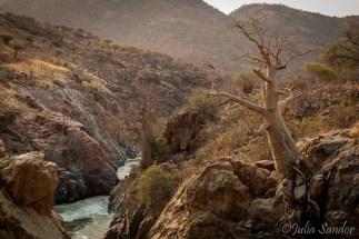 Baobabs in the Kunene River bed