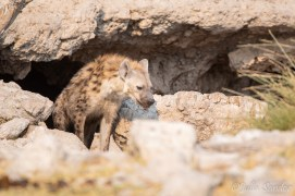 """Hyena """"elegantly"""" getting out of his cave"""