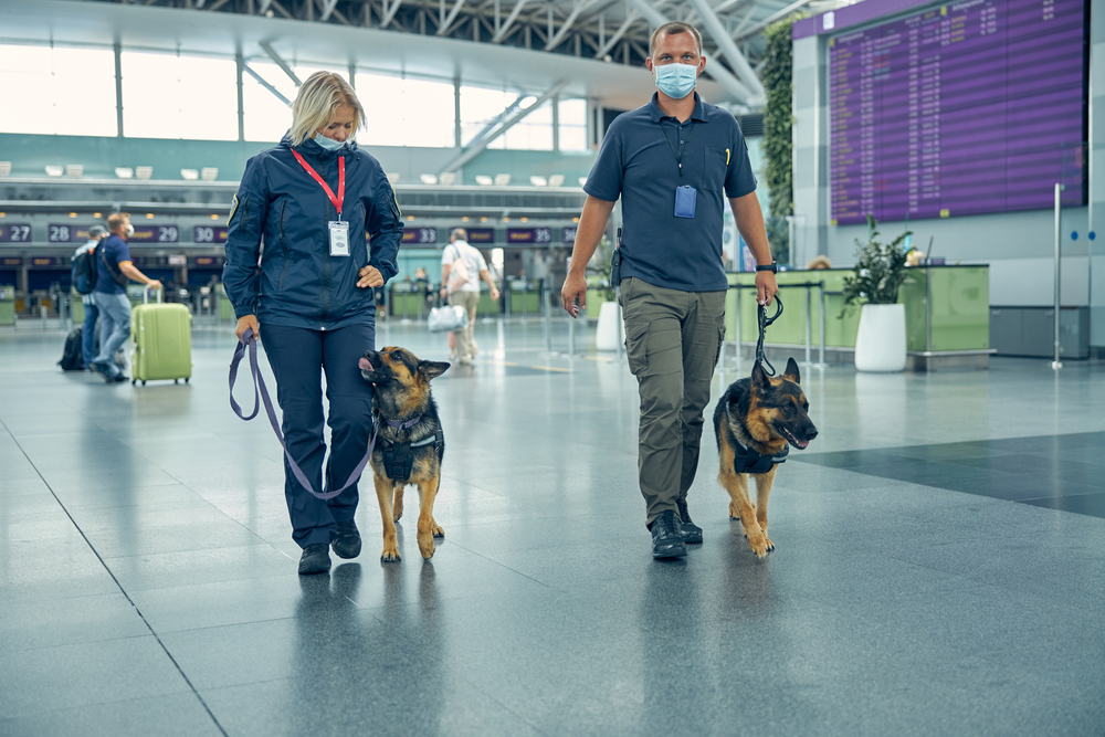 Beginning in the spring of 2021, four COVID-19 detection dogs will be on duty at Finland's Helsinki Airport. Six more are in training.