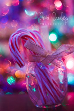 Christmas Lights and Candy Canes with Golden Bow