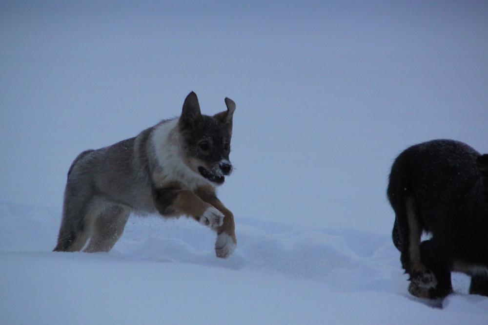T-Puppies - Week 14 (2/3)