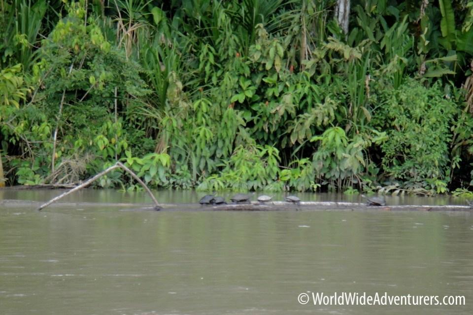 Amazon Napo Ecuador 25