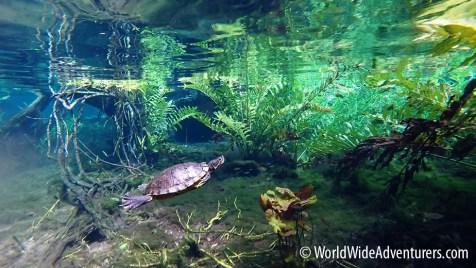 Grand Cenote Yucatan Mexico 16