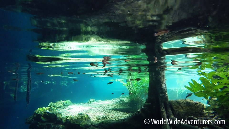 Grand Cenote Yucatan Mexico
