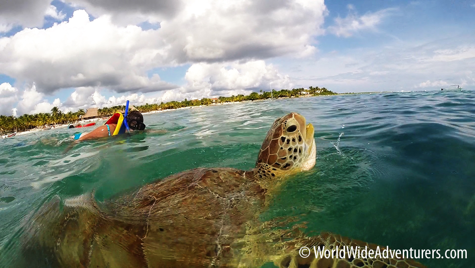 Swimming with Endangered Green Sea Turtles at Akumal Beach