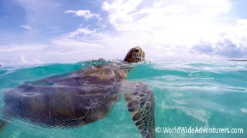 Swimming with Turtles at Akumal Beach Mexico2.