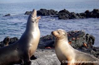 Galapagos Islands 21