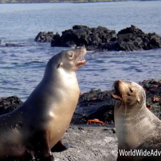 Galapagos Islands 22