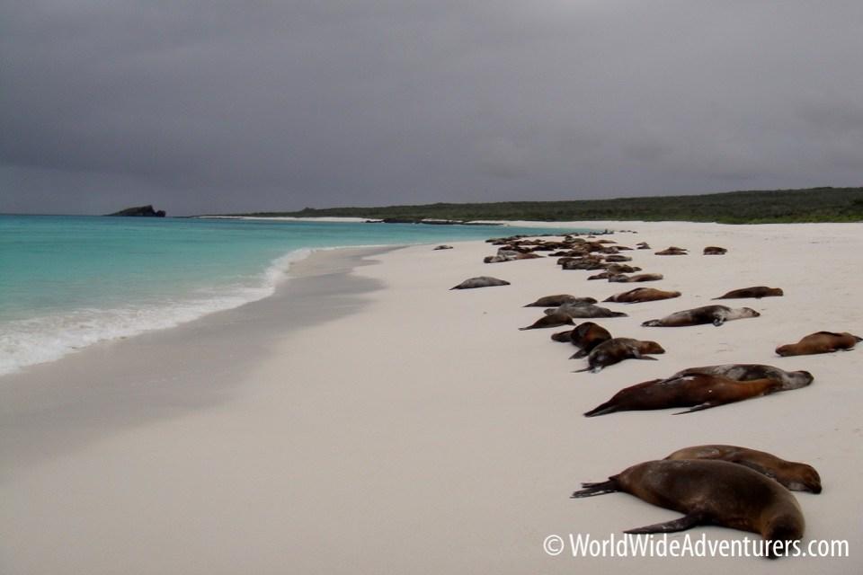 Galapagos Islands 7