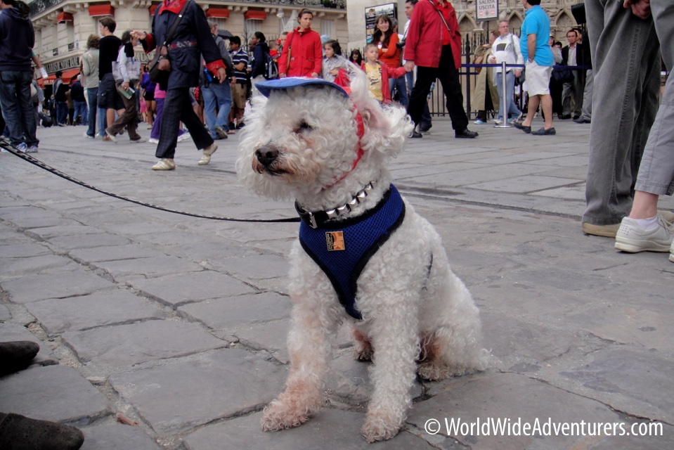 Dogs in Paris 2