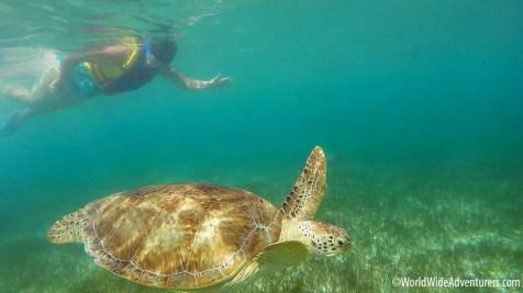 swimming-with-turtles-at-akumal-beach-mexico13