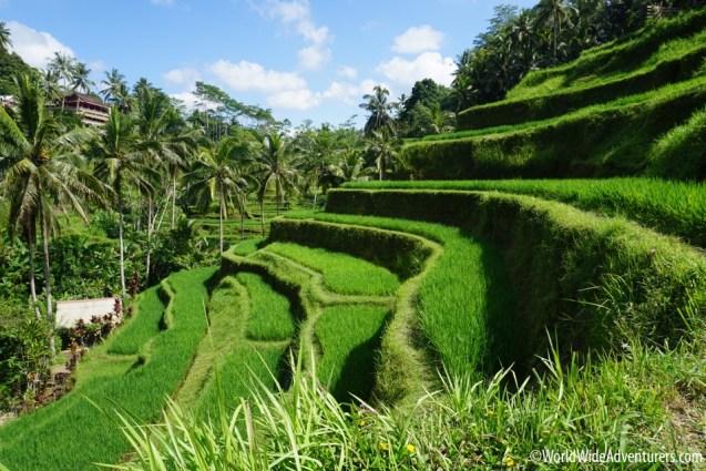 Living in Bali71