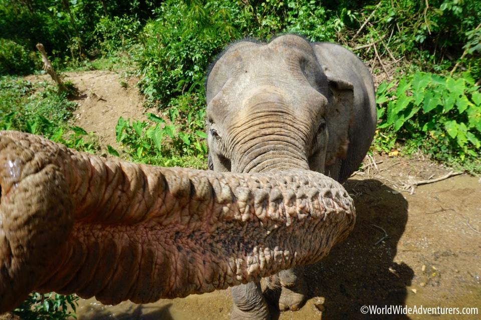 Elephant Sanctuary, Luang Prabang, Laos