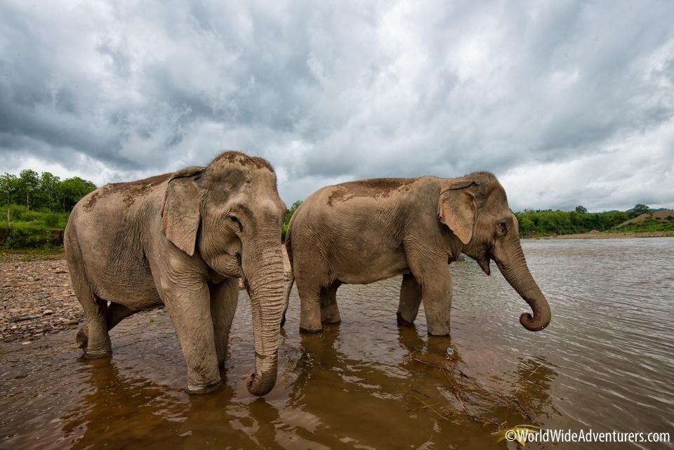Elephant Sanctuary Laos