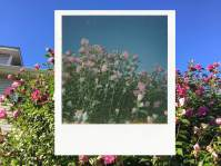 Tricia Stansberry (Ohio) - Summer's Last Bloom