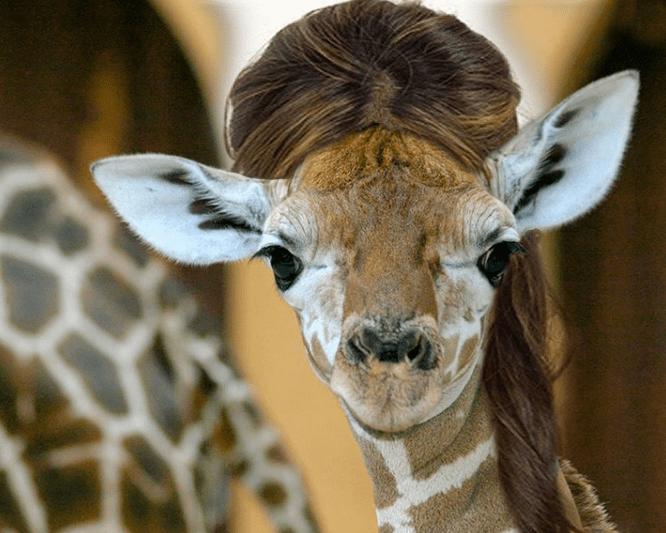 Animals With Human Hair 20 PHOTOS WorldWideInterweb