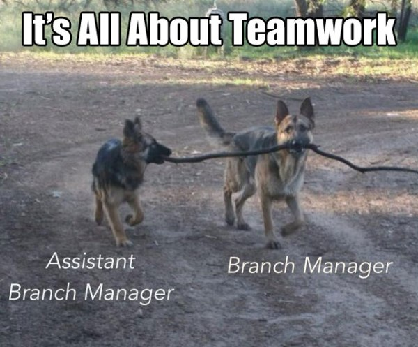 It's All About Teamwork (20 PICTURES)
