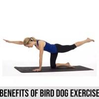 Benefits of Bird Dog Exercise