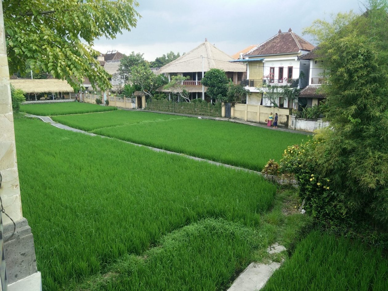 better view of rice paddys