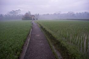 Villa In Rice Field