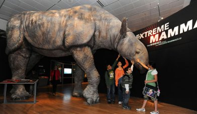 Extreme Mammals 1