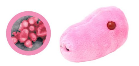 Swine Flu Plush Toy