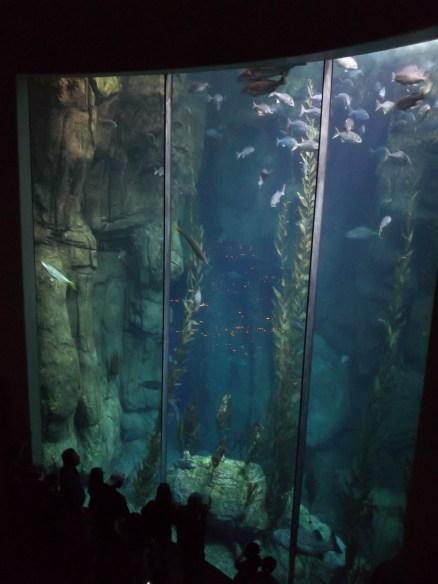 LB Aquarium Large Tank