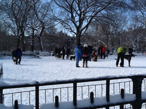Dog Run In Tompkins Square Park