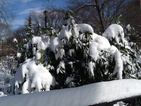 Snow Burdened Tree