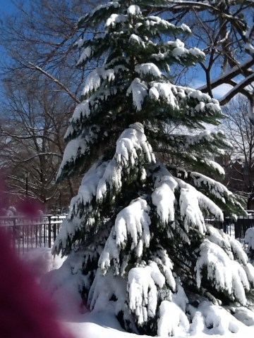 Snow Xmas Tree with Glove