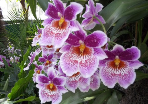 Multi Colored Orchids