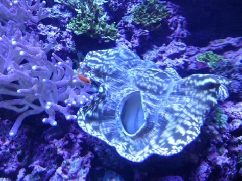 Vagina Coral