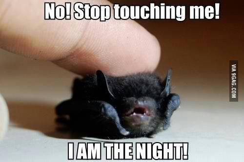 Baby Bat Meme