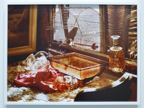 GoldenBoy Bird in Cage