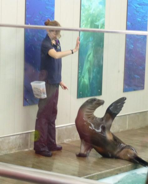 Fur Seal Show